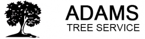 Adams Tree Service Houston