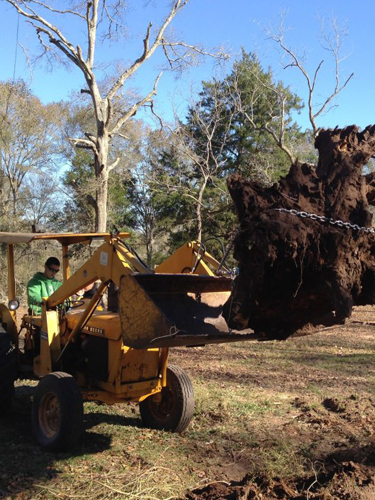 Adams Tree Service Services Houston Cypress Katy Woodlands And Surrounding Areas With Professional High Quality Landscaping